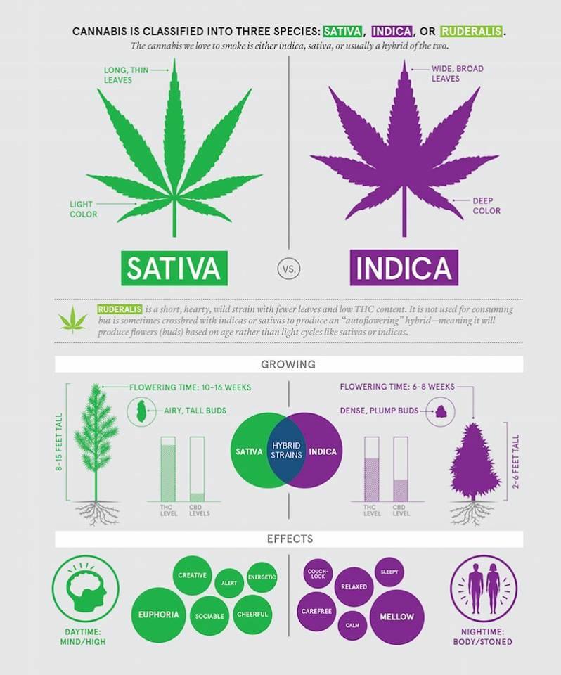 Sativa-Indica-Comparison.jpg