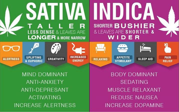 Cannabis-Strains-Guide.jpg