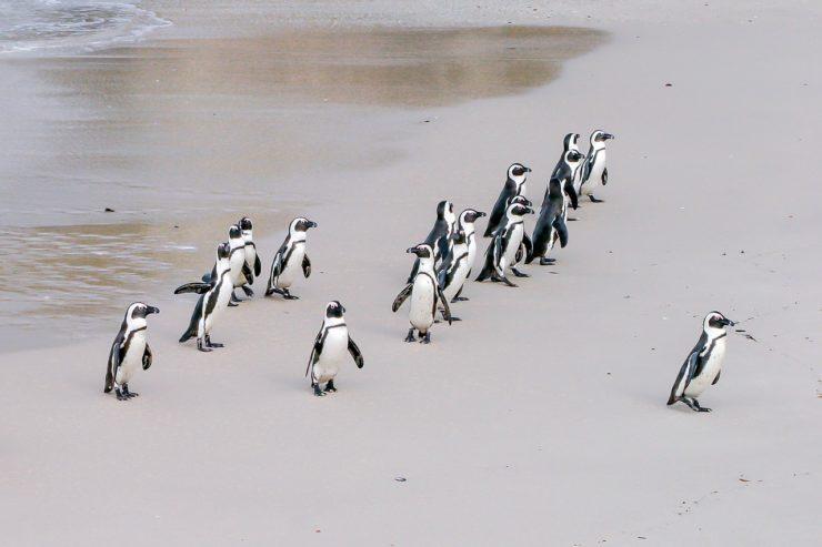 penguin-1719608_1280-740x493.jpg