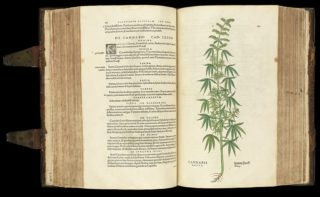 Cannabis_plant_from_De_historia..._Wellcome_L0051246-320x197.jpg