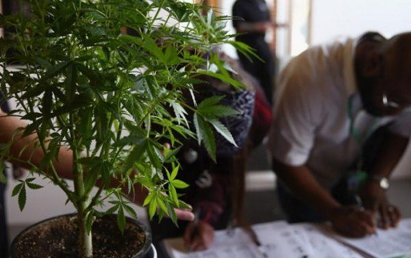 Study: Federal Marijuana Legalization Would Generate 1 Million Jobs